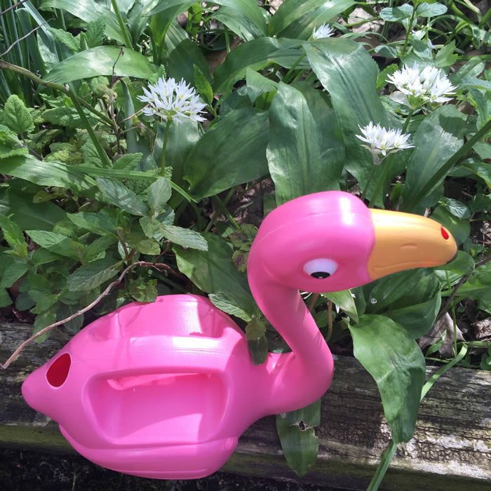 Flamingo Watering Can For Sale Online Free Uk P P