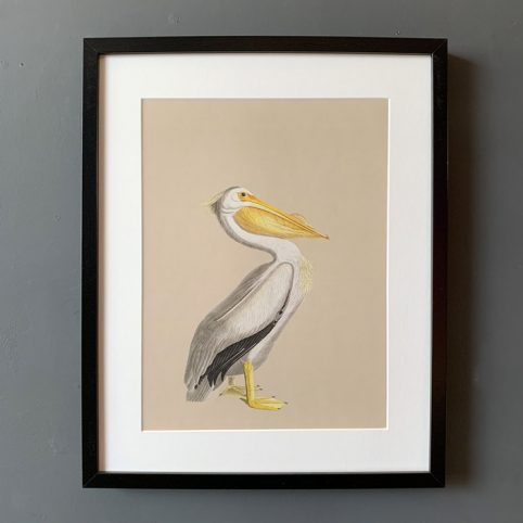 Pelican framed print with a vintage vibe. For sale online with free P&P on all order over £20