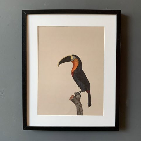 Toucan Framed Print with a vintage feel. Buy online with all orders over £20 received free delivery