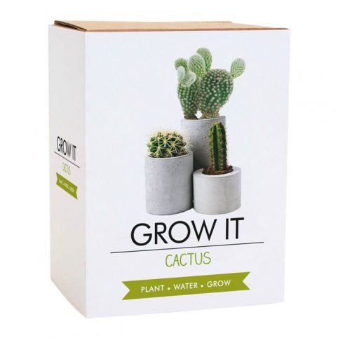 Grow It Cactus Gift Republic - Buy Online UK