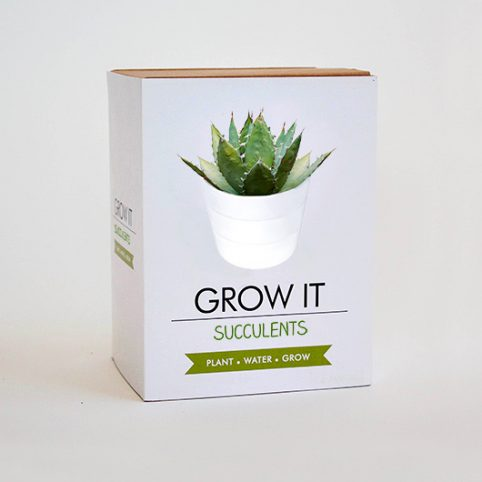 Grow It Succulents Gift Republic - Buy Online UK