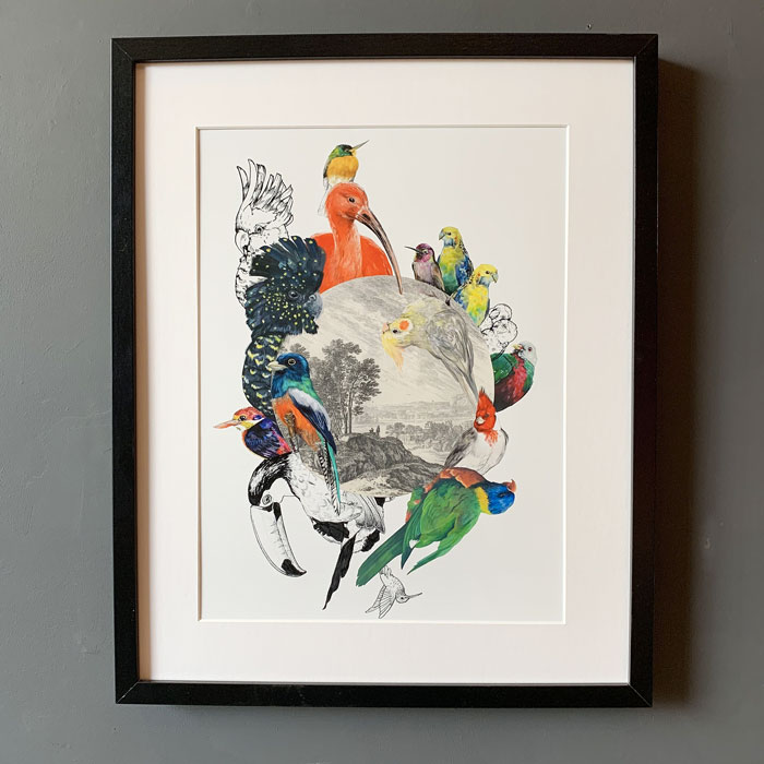 Multi birds framed print purchase online with free UK delivery over £20