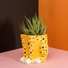 Urban Jungle Leopard Feet Flower Pot - Buy Online UK