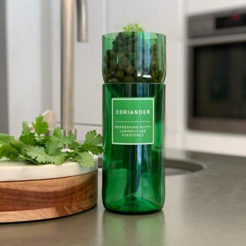 Coriander hydro herb kit the eco-friendly gift from source lifestyle - buy online with free UK delivery