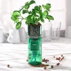 Basil Hydro Grow Kit - Purchase Onlne With Free UK Delivery Over £20