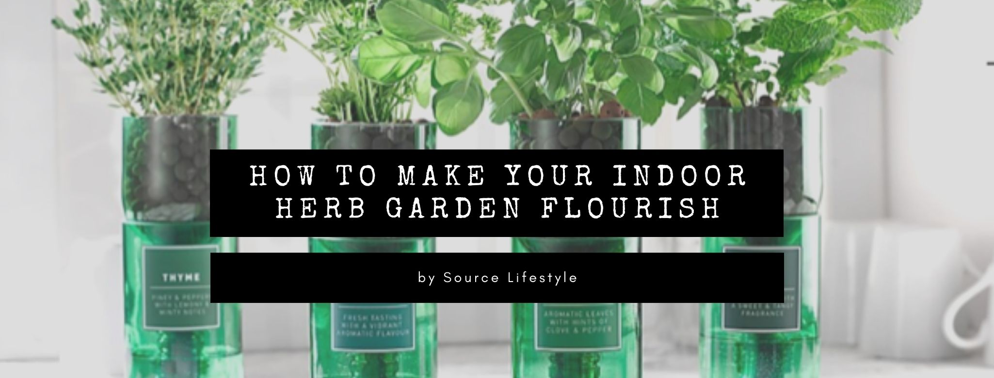 How to make your indoor herb garden flourish