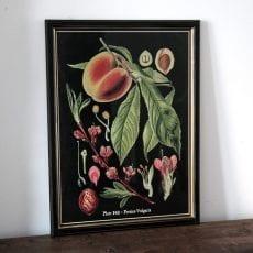 Black Framed Botanical Print - Buy Online UK