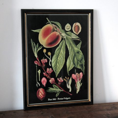 Black Framed Botanical Print - Buy Online UK