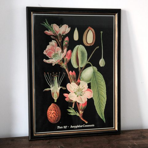 Framed Botanical Print - Buy Online UK