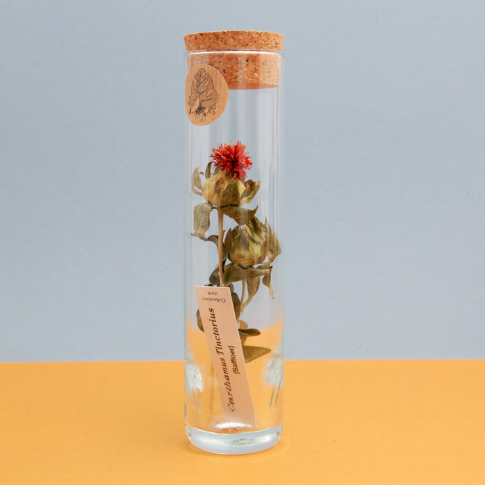 dried-flowers-in-glass-tubes