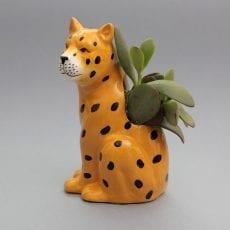Plantophile Jaguar Plant Pot With Succulent - Buy online UK