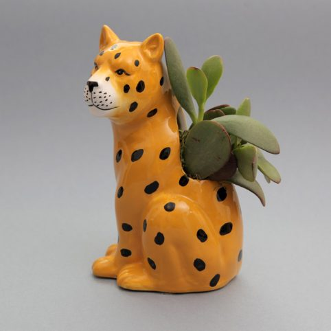 Plantophile Jaguar Plant Pot With Succulent - Buy online UK