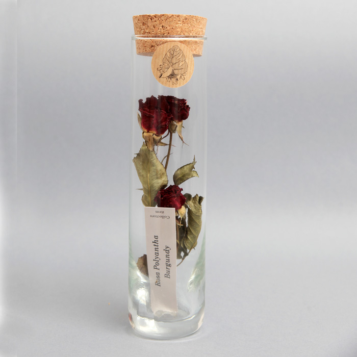red-rose-in-tube