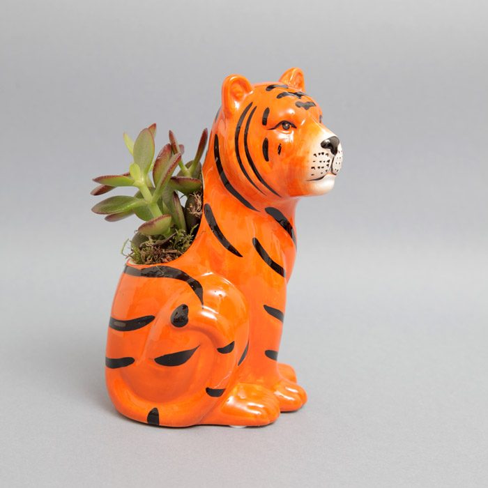 Tiger Plant Pot With Succulent - Buy Online UK