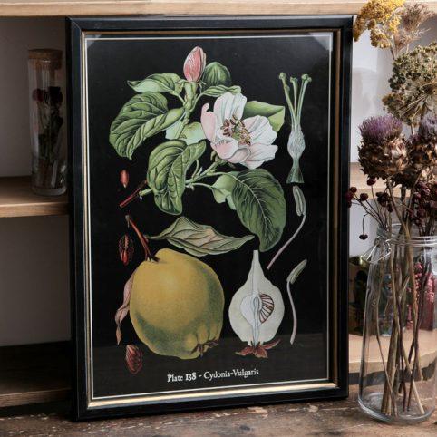 Framed Botanical Print - Buy Online UK