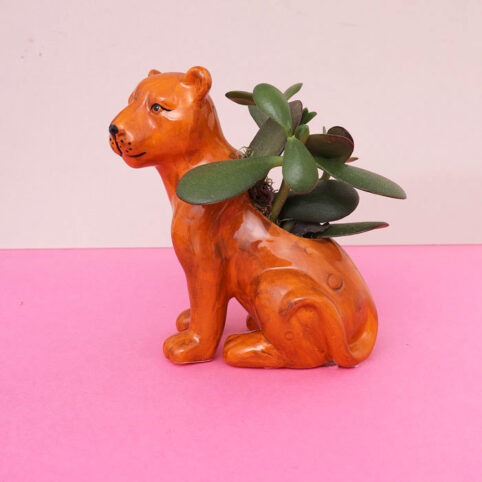 Small Succulent Plant Pot Lioness - Buy Online UK