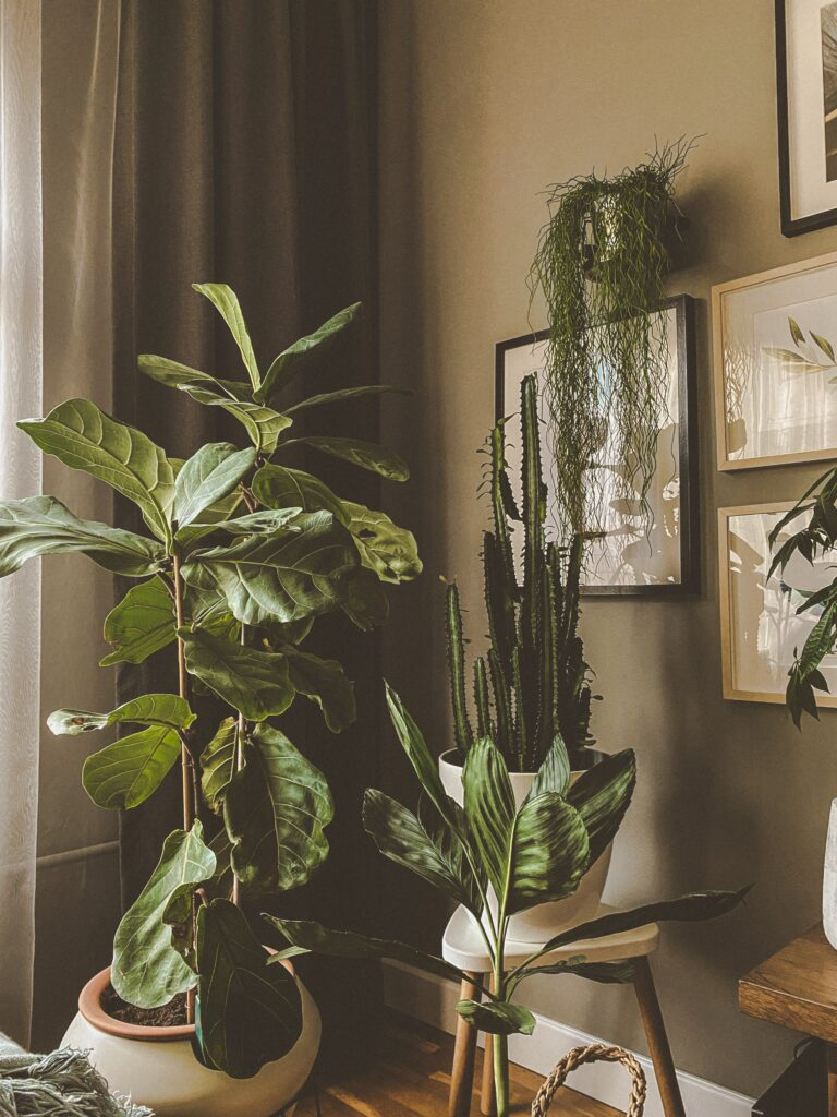 Jungle vibes home happy space