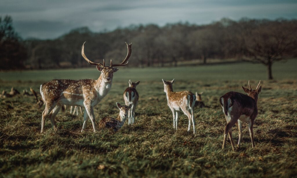 Best parks in London to try out your roller skates - Richmond Park