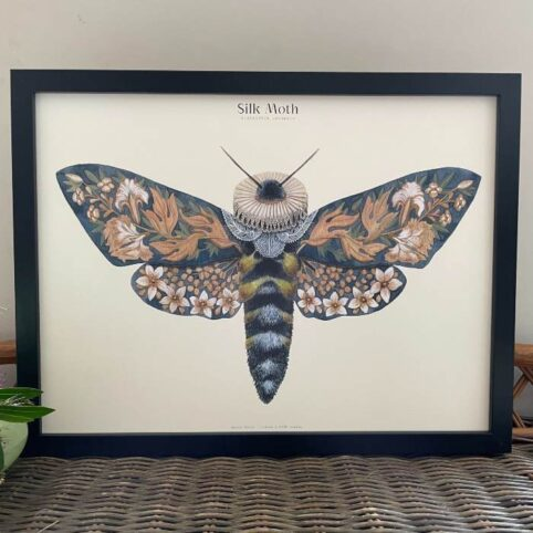 Moth Wall Art Print