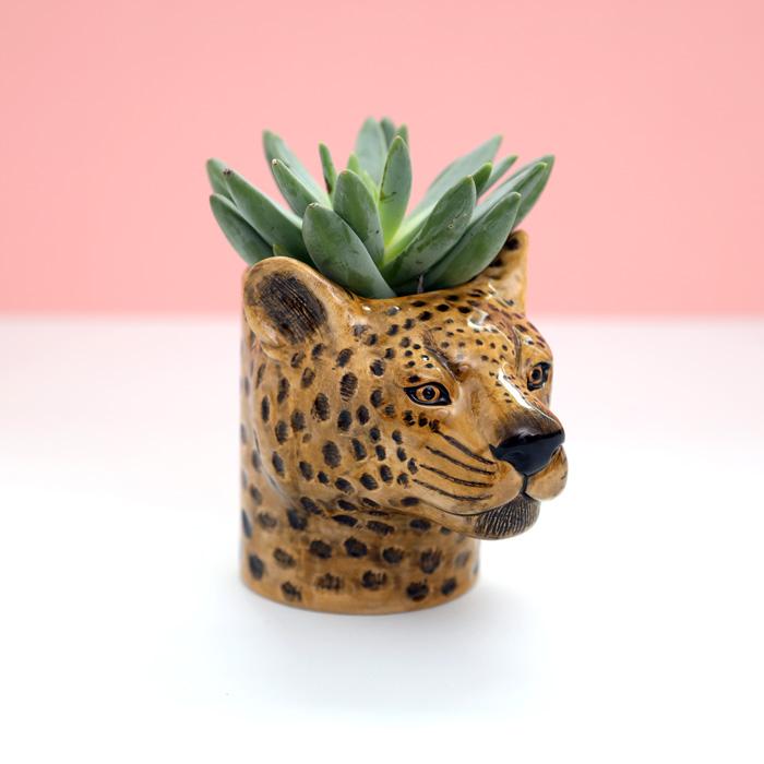 Leopard Plant And Pen Pot - Purchase Online UK