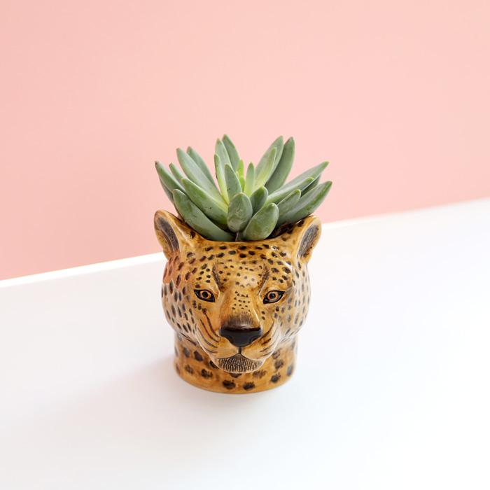 Leopard Plant and Pen Pot - For Sale Online UK
